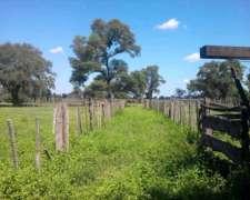 Campo Ganadero - Quimili - Sgo. del Estero