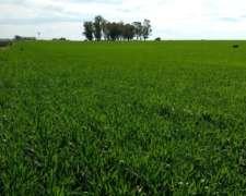 70 Hectareas de Campo Agricola