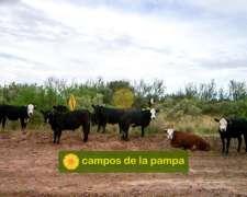 La Pampa - Estancia Ganadera de 15.000 Ha - Oportunidad