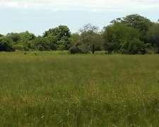 Campo Mixto Agrícola Ganadero