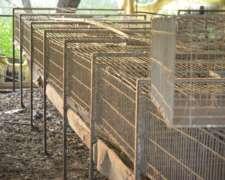 Conejos Jaulas Completas Casi Nuevas