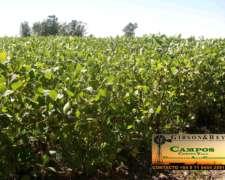 Ceballos (int. Alvear) LP 1200 Has 95% Agricolas