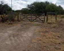 Vendo Terneros En Zona Guatrache La Pampa