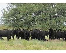 Se Alquila 6800 H Ganaderas Victorica 1100 Vacas