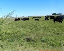 500 Has Agrícolas en Daireaux