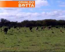 7500 Has Guatrache la Pampa U$S 1.100/ha.