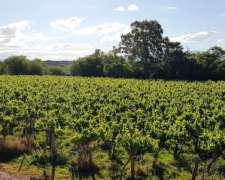 55 Hectáreas Finca Campo Cultivo VID Frutic Ganader Agric