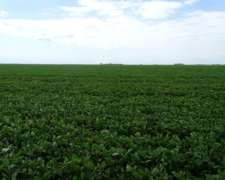 C0308 2300 Has Agricola Venta Rio IV Cordoba