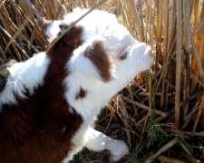 Campos para Vacas o Invernadas