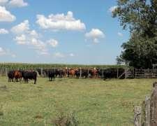 Campo en Venta en San Miguel del Monte. 420 Has. Agrícola