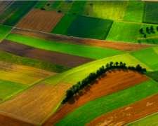 Se Busca Campo Agrícola para Arrendamiento