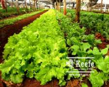 4,5 Has. Chacra en Etcheverry. Ideal Horticultura.
