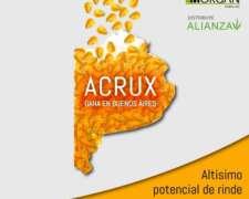 Nord Semillas de Maíz (acrux, Avalon, Borax y Buyan )
