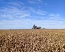 Oportunidad 565 Agrícola.hectareas Ítalo U$S 3800:/ha