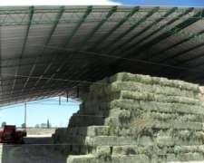 Alfalfa en Plena Producción - Bajo Riego