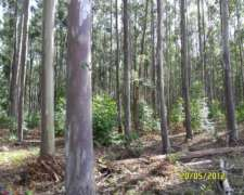 Madera De Eucalyptus Y Pino Aserrrado - Leña Vegetal
