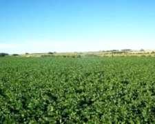 Busco Campo Agricola para Arrendar (pcia.cba Zona Núcleo)