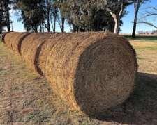 Rollos De Alfalfa 100% Puros.