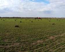 Fardos de Alfalfa de Primera