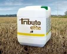 Tributo Elite Herbicida - Metribuzin 20% ME