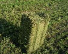 Fardos de Alfalfa Verdes de Primera