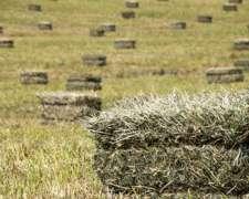 Fardo de Alfalfa de Excelente Calidad