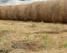 Vendo Rollos de Pastura de muy Buen Calidad