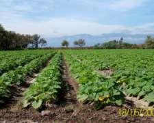 Finca Cultivos Intensivos Jujuy