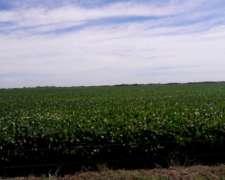 Alquilo Campo 1014 Ha Agricultura, Tambo y Ganaderia