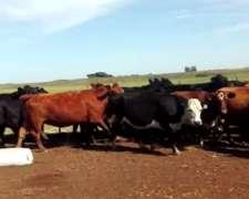 30 Vacas Preñadas(parición Mayo-junio) Oportunidad