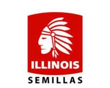 Semilla De Maiz Illinois Mgrr2 Variedad I767