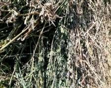 Rollos de Alfalfa Excelente Calidad