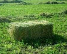 Fardos De Alfalfa En San Rafael - Mendoza