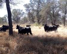 2500 Ha Ganaderas. Campo Armado. Taco Pozo, Chaco