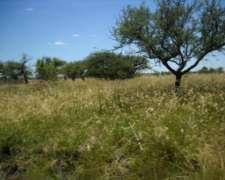 Corrientes, Curuzu Cuatia, Alquilo 3000-3500-5000 Ganaderas.