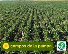 Cordoba - Venta Estancia Agricola-ganadera - 4.900 Ha