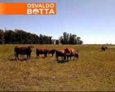 16 Has Agricolas Urdinarrain