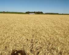 Vendo Campo Agrícola 2200 Has 100% Agricolas