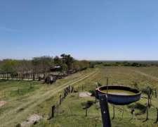 Campo Ganadero en Corrientes