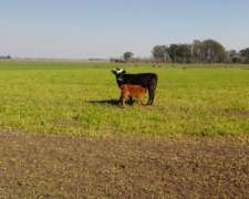 En Venta 250 Hectareas Campo Agricola