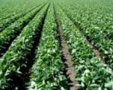Roldan Agrícola 100% para Urbanizar