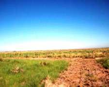Venta de Campo Ganadero 8300 Has Mitre, Santiago del Estero