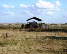 Venta de Campo Ganadero 1320 Has Dolores, Buenos Aires