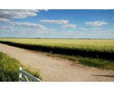 Campo en Venta en Tres Arroyos 650 Has. 90 Agrícola