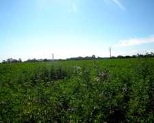 400ha Agricolas en Medanos Pcia de BS AS