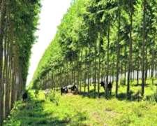 Campo Ganadero Forestal con Renta