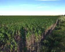 70 Has Agrícolas en Irazusta, Depto Gualeguaychú.