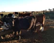 Vacas Nuevas Paridas y Adelantadas