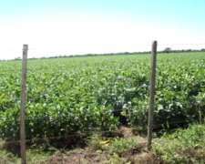 200 Has Córdoba. Zona Alta Gracia. 100 % Agrícola.