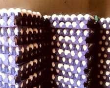 Huevos Blancos, Frescos y Orgánicos